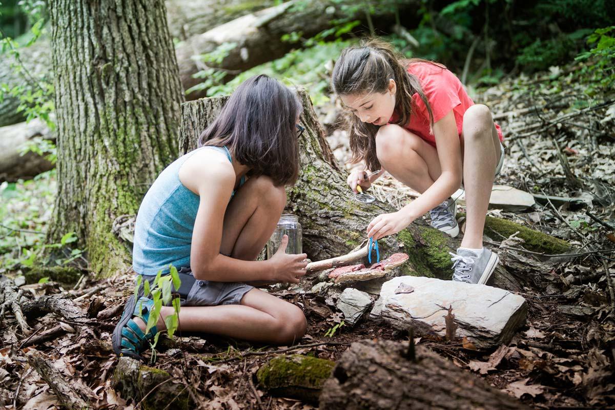 ¿Sabías que los bosques albergan al 80% de todas las especies terrestres de animales, plantas e insectos?