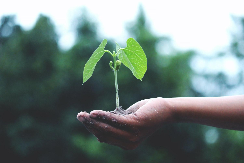 Una clase más verde: cuidamos la tierra desde la escuela