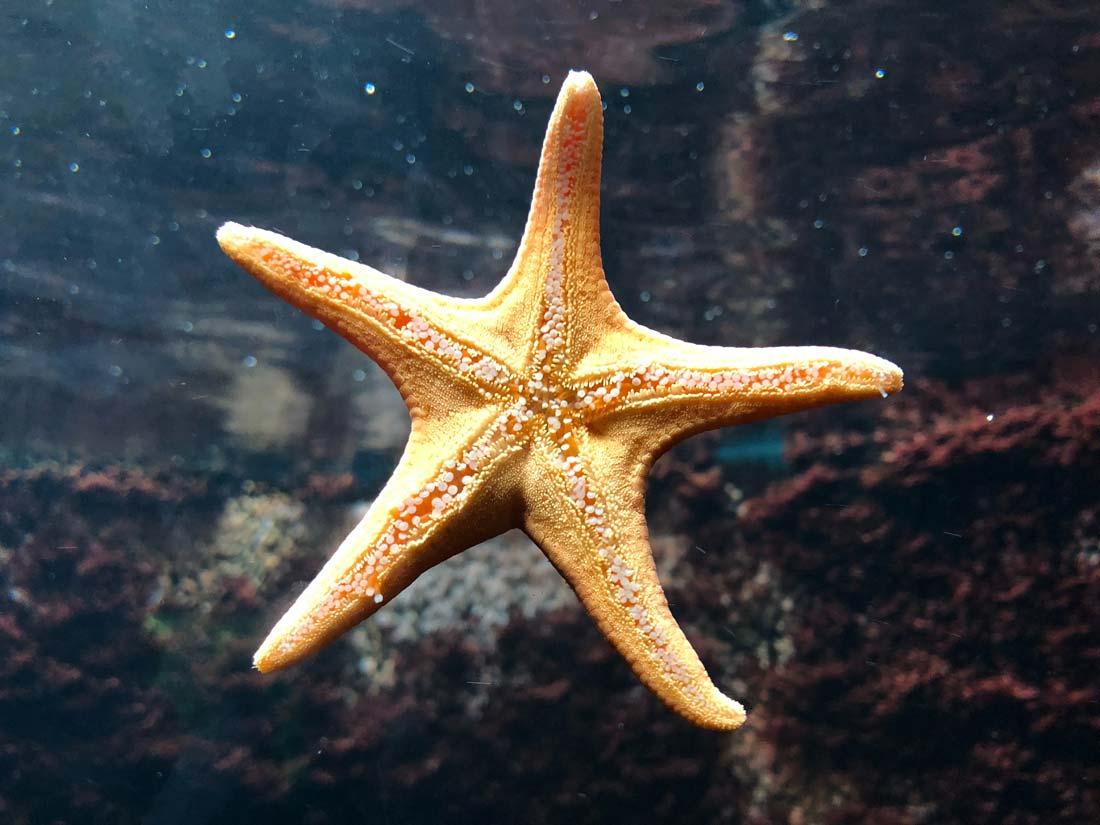 Más de tres mil millones de personas viven de la biodiversidad marina y costera.