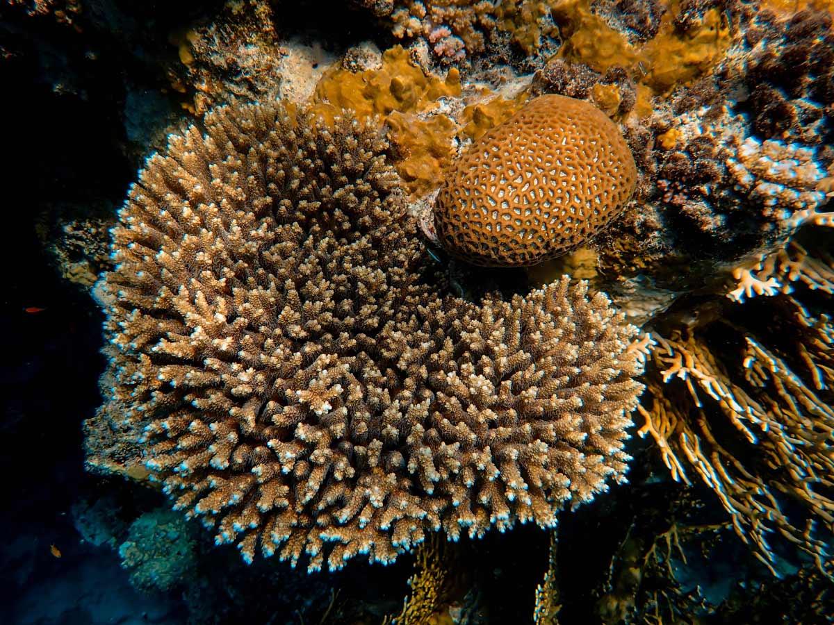 Los océanos absorben un tercio de todo el dióxido de carbono que emitimos los humanos.